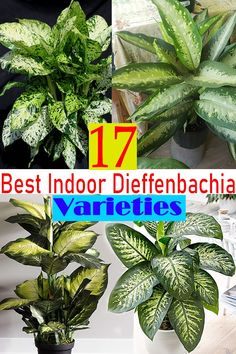 Indoor Plants Names, Best Indoor Plants, Dieffenbachia Care, Planting Succulents, Planting Flowers, Alocasia Plant, Best Air Purifying Plants, Household Plants, Plant Catalogs