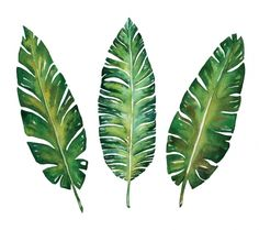 Banana leaves watercolor plant botanic painting on white background, vector illustration - stock photo Watercolor Plants, Watercolor Leaves, Watercolor Paintings, Watercolor Design, Design Set, Leaf Design, Design Floral, Tropical Flowers, Event Poster Design