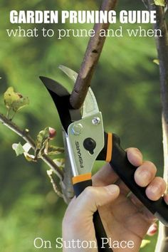 Garden Pruning Guide   List of easy to grow plants and when to prune from a DIY gardener. This is broken down into types of plants with examples that make it super simple.