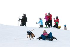 The dog derby 2013 at Coronet Peak. Part of the American Express Queenstown Winter Festival 2013.