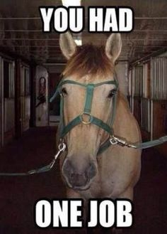 I can't even breathe this person should not own a horse - Horses Funny - Funny Horse Meme - - I can't even breathe this person should not own a horse The post I can't even breathe this person should not own a horse appeared first on Gag Dad. Funny Horse Memes, Funny Horse Pictures, Funny Horses, Cute Horses, Funny Animal Memes, Cute Funny Animals, Beautiful Horses, Funny Quotes, Funny Humor