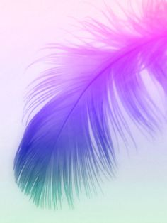 Painted Feather Art Print by allycoxon Iphone Wallpaper Violet, Watercolor Wallpaper Phone, Blue Flower Wallpaper, Feather Wallpaper, Cellphone Wallpaper, Colorful Wallpaper, Galaxy Wallpaper, Wallpaper Backgrounds, Beautiful Wallpaper Pictures