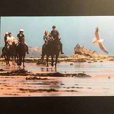 Horse riding on the beach - yes a while ago! Love this photo. Think it is time to get back in the saddle! Any recommendations for beach rides in Victoria? I remember doing one at Apollo Bay and at Warrnambool and on the Mornington Peninsula. #horseriding #trailrides #beachrides #warrnambool #apollobay #visitvictoria #horses #summer @destinationwarrnambool @visitgreatoceanroad @visitmorningtonpeninsula @visit_apollobay @visitgeelongbellarine @elialom @bec_stoneman @lisabarrondesignerfashion…