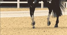Rafalca's piaffe (click through for GIF) This is gorgas I just learned how to do a half pass lol! All The Pretty Horses, Beautiful Horses, Rare Horse Colors, Horse Dance, Horse Videos, Dressage Horses, Horse Quotes, Gifs, Horse Pictures