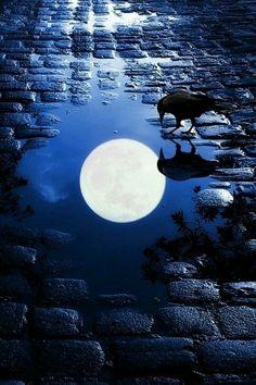 bird and moon