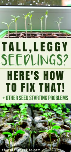 Indoor Gardening Tip: 4 common seed starting problems and how to fix them! Vegetable Gardening | Organic Gardening |
