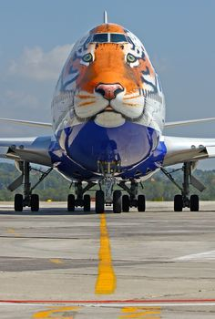 Transaero Boeing 747 and Amur Tigers Conservation Centre Aviation Image, Civil Aviation, Aeroplane Flying, Tiger Conservation, Aviation Humor, Passenger Aircraft, Air Photo, Boeing 747, Nose Art