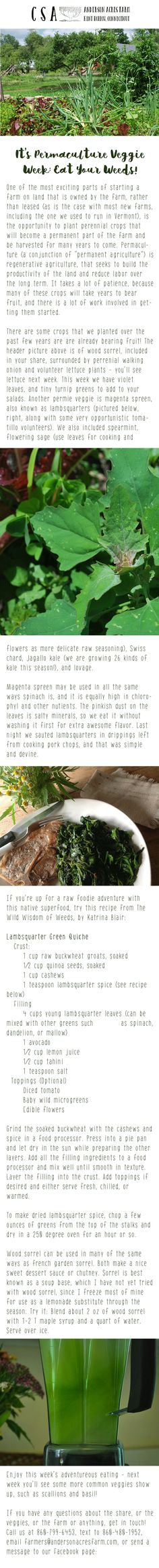 It's #Permaculture #Veggie Week: #Eat Your #Weeds! #Food #Ag #OrganicFarm #Connecticut #Kent #Organics #FarmFresh #FarmToPlate #Animals #Goats #YearRoundFarms #AgBlog #Recipes #FarmLife #KnowFarmsKnowFoods #Farmers #CTFarms