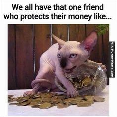 Cat memes Mine, mine, mine all mine...