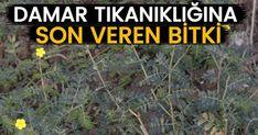 Tıkalı Damarları Açan Çoban Çökerten Otu Tikal, Herbs, Health, Nature, Plants, Naturaleza, Health Care, Herb, Plant