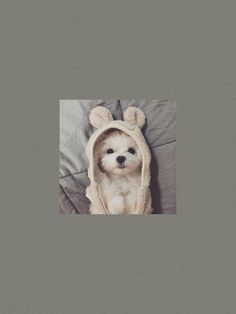 Cute Dog Wallpaper, Kawaii Wallpaper, Locked Wallpaper, Animal Wallpaper, Iphone Wallpaper Vsco, Iphone Wallpaper Tumblr Aesthetic, Disney Phone Wallpaper, Cute Cartoon Wallpapers, Pretty Wallpapers