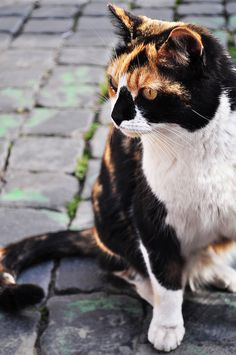 Rome is known for its feral cats, and I was lucky enough to make a new friend while touring the old ruins.   - Laura Peppe by APIstudyabroad, via Flickr