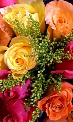 Download 480x800 «Colorful roses» Cell Phone Wallpaper. Category: Flowers