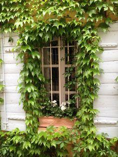 Ventanas_windows