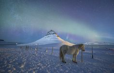 Icelandic Dreams - start with a picture that represents very well this country including the northern lights, the icelandic horses and the famous mount Kirkjufell. I focus the attention over the horse because his static behavior, trying to take a long exposure photography (25 seconds) using the horse as the protagonist. Hope you like the final result. Cheers! Fran