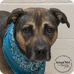 Urgent! I am at a full, high kill shelter in Troy, OH - German Shepherd Dog Mix…