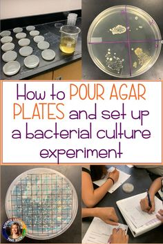 biology projects TUTORIAL: How to pour agar plates and set up a bacterial culture experiment from Science Lessons That Rock Biology Projects, Biology Lessons, Science Fair Projects, Science Lessons, Biology Experiments, Science Biology, Teaching Biology, Rock Science, Life Science