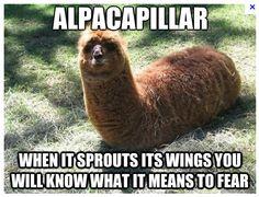 Alpacapillar! (Reminds me of Jenna and Rory's llamabunny!)