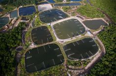 Shrimp farms in Thailand - http://theaquaculturists.blogspot.co.uk/search?updated-max=2013-12-19T05:22:00-08:00&max-results=7&reverse-paginate=true