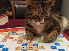 Gordon cat play scrabbles!!! My Family, My Life, Friends, Cats, Gatos, Boyfriends, Kitty, Serval Cats, Cat