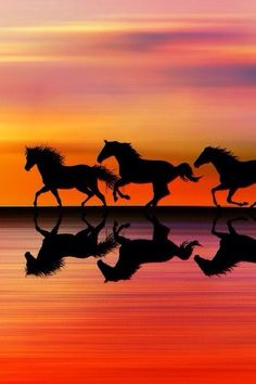 Wild horses at sunset ✿⊱╮I am not necessarily a horse lover,but I love horses running wild & free-Donya Pretty Horses, Horse Love, Beautiful Horses, Animals Beautiful, Beautiful Sunset, Animals And Pets, Cute Animals, Horse Pictures, Horse Photography