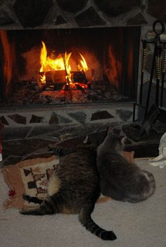 cats by the fireside - Winter Cabin, Autumn Cozy, Cozy Winter, Cozy Fireplace, Hearth And Home, Winter Theme, I Love Cats, Warm And Cozy, Cats And Kittens