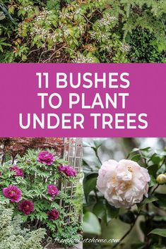 Shade Loving Shrubs: 11 Beautiful Bushes To Plant Under Trees - Gardening @ From House To Home This list of bushes that thrive in the shade is AWESOME! So many beautiful flowers and they are all perennials that will look gorgeous in my garden design. Shade Plants Container, Shade Garden Plants, Garden Shrubs, Garden Trees, Shaded Garden, Fruit Garden, Flowers Garden, Garden Planters, Container Gardening