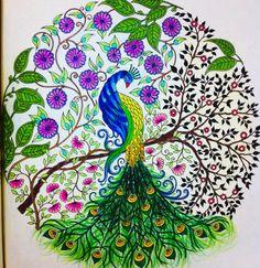 Jardim Secreto Secret Garden By Amanda Art Pavo RealColoring BooksColouringAdult