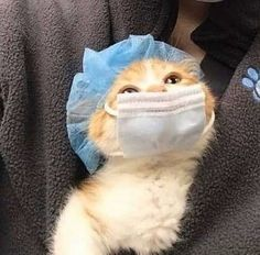 Cute Baby Cats, Funny Kittens, Cute Little Animals, Cute Cats And Kittens, Cute Funny Animals, Funny Animal Pictures, Kittens Cutest, Funny Cat Photos, Ragdoll Kittens