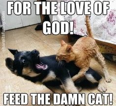 Feed The Cat - https://shareitsfunny.com/feed-the-cat/ - Funny Animals on Share Its Funny #feedthecat