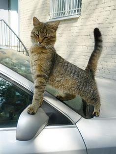 Cats Invented Self-esteem,   Cutest Paw