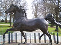 Kentucky Horse Park....The Morgan Horse ; as it used to be, gaw-geous!