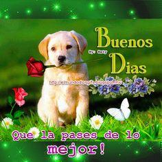 Buenos días que la pases de lo mejor! Good Morning, Labrador Retriever, Animation, Illustration, Funny, Dogs, Quotes, Celebration, Angel