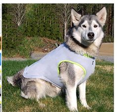 Pet sunscreen jacket for dogs |  Living With A Border Terrier