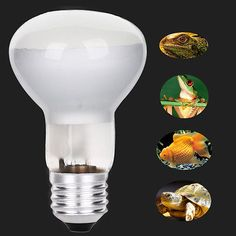 E27 UVA UVB Basking Bulb Reptile Halogen Spotlights Warm Basking Full Spectrum UVA UVB Bulb 220V #>=#>=#>=#>=#> Click on the pin to check out discount price, color, size, shipping, etc. Save and like it!
