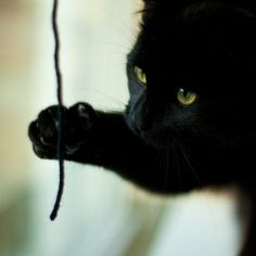 The last time I pulled a bit of yarn, like this, I unraveled my Human...er, I unraveled her knitting.  'wonder what would happen if I pulled it again?