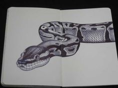 Marvelous Drawing Animals In The Zoo Ideas. Inconceivable Drawing Animals In The Zoo Ideas. Snake Sketch, Snake Drawing, Snake Art, Python Drawing, Animal Sketches, Animal Drawings, Art Sketches, Drawings Of Snakes, Detailed Drawings