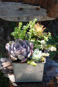 Succulent  Sedum Garden in Metal Cube by LoveChrystal on Etsy,
