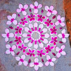 Flower Mandalas by Kathy Klein Flower Circle, Flower Petals, Art Floral, Land Art, Mandala Art, Flower Of Life, Flower Art, Elefante Hindu, Things Organized Neatly