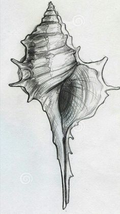 Illustration about Hand drawn pencil sketch of a spiky spiral sea shell. Illustration of sketched, drawn, shells - 44316394 Pencil Art, Pencil Drawings, Art Drawings, Fish Drawings, Seashell Tattoos, Seashell Drawings, Sea Tattoo, Landscape Sketch, A Level Art