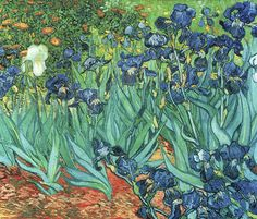 van Gogh, Vincent - Irises - Wall Mural & Photo Wallpaper - Photowall