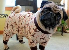 This article has a ton of pug pictures. If you are looking for a place to look at adorable pugs than you have come to the right place. My beautiful black pug named Bella was my inspiration for putting together this collage of pug pictures. Amor Pug, Pug Love, I Love Dogs, Cute Dogs, Baby Animals, Funny Animals, Cute Animals, Pug Pictures, Animal Pictures