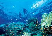 This would suit me just fine! Great Barrier Reef - Love!