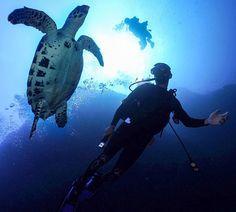 Mais um dos mergulhos cheios de vida aqui na Indonésia  Por alguns segundos dei passos de tartaruga   : @kickthegrind   => @indtravel (Min. Turismo da Indonésia) #TripofWonders #WonderfullIndonesia