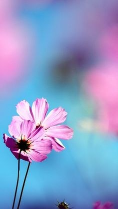 Beautiful flowers in full bloom Android phone wallpapers 1080x1920 (09)