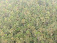 Asia Pulp and Paper's Forest Clearing Moratorium in Indonesia is Holding