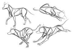 Image result for wolf anatomy drawing reference