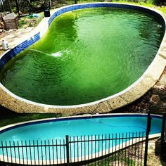 How To Get Rid Of Black Algae In A Pool Pools Pool Chemicals And Swimming Pools