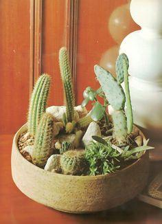 Cactus garden in a l