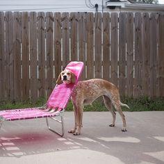 Chair? What chair??